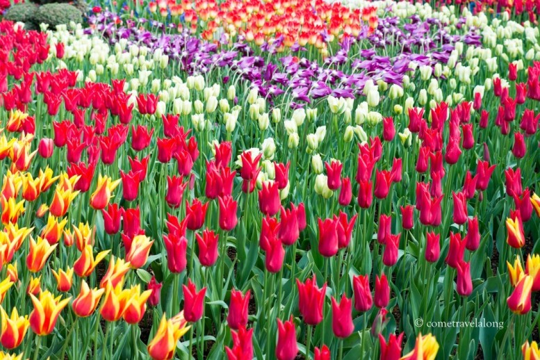 The show garden displayed the specialty tulips and different varieties.